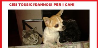 alimenti cibi tossici cane chihuahua