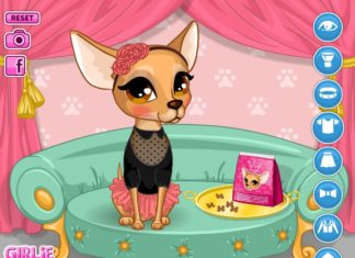 gioco chihuahua online flash game