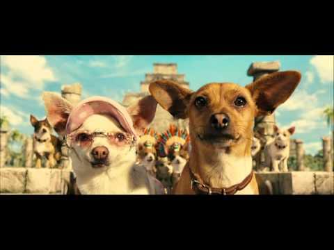 Film sui Chihuahua