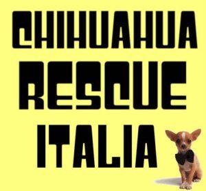 Trovare un chihuahua in adozione - regalo, Guida e consigli. Di Tutto